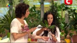 видео орхидея и уход за ней