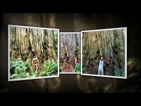 Social media puts secret redwood grove on the map