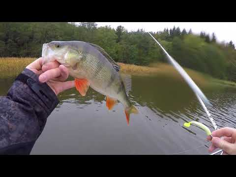 Pike And Perch Fishing In Sweden