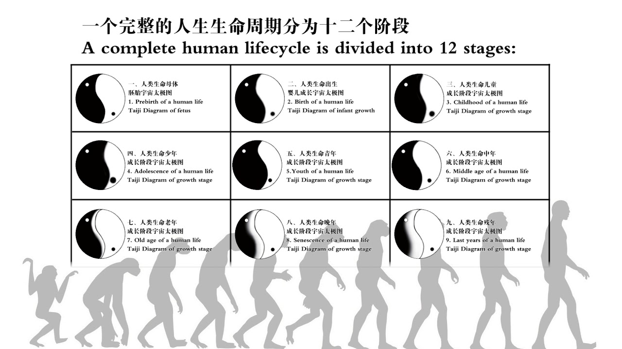 human life cycle stages diagram 4 circle venn maker 18a complete lifecycle is divided into 12 youtube