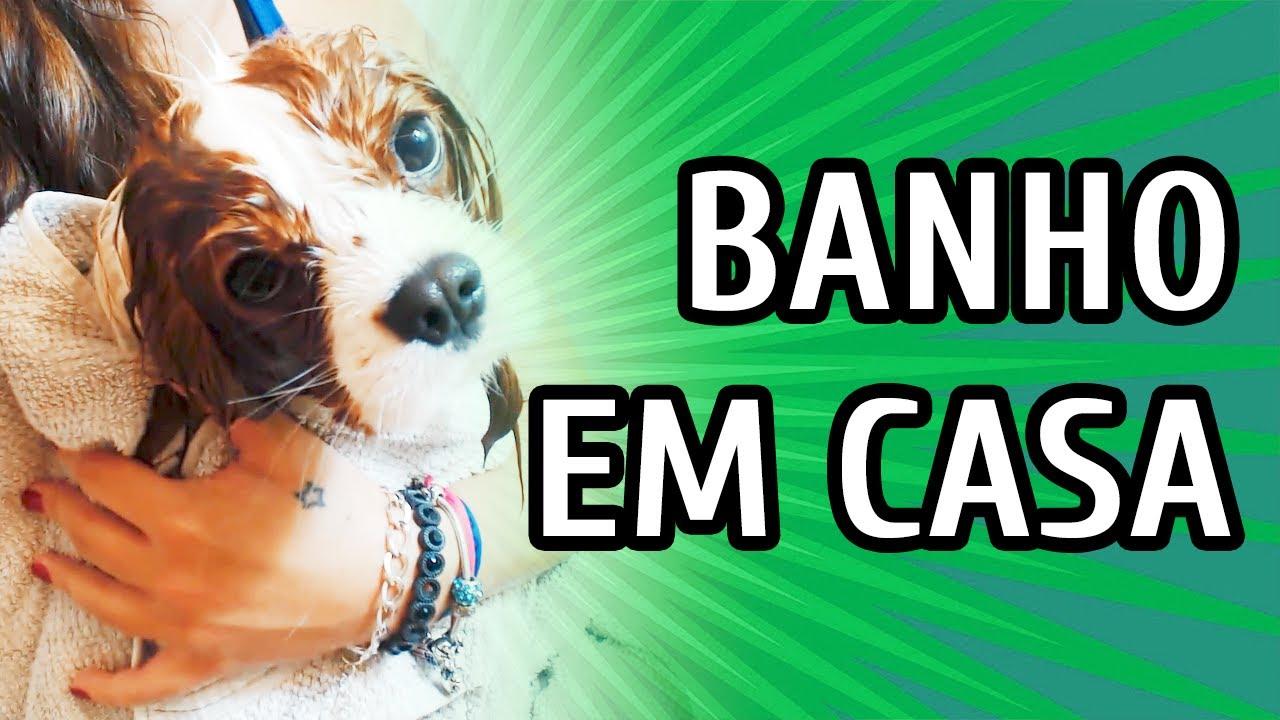 COMO DAR BANHO EM CACHORRO EM CASA OU APARTAMENTO