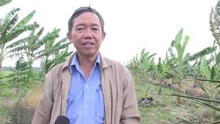 Kỹ thuật trồng dừa sáp