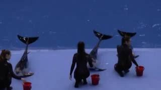 океанариум. Владивосток. о. Русский.  Самое прикольное представление дельфинов в океанариуме