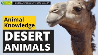 How Do Animals Survive In The Desert? 🐪🌵 - Animals For Kids - Educational Video