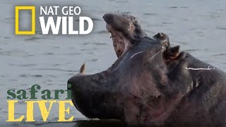 Safari Live - Day 119 | Nat Geo Wild