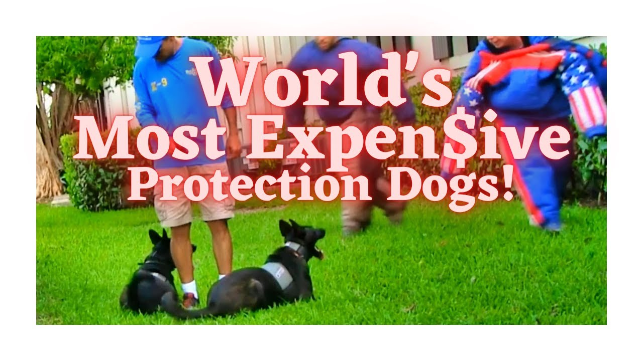 World's Most Skilled, Expensive Protection Dogs