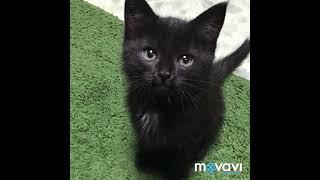Внимание! Екатеринбург!!! Котятам срочно нужен дом! Им всего 2 месяца! Отдам в хорошие и добры руки!