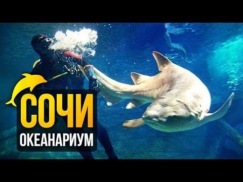 Самый большой в мире океанариум