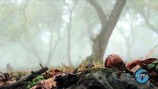 吉尔吉斯斯坦:保护核桃森林