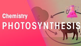 Photosynthesis and respiration | Chemistry for All | The Fuse School