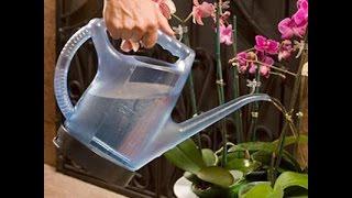 Цветущие домашние цветы. Как поливать комнатную орхидею