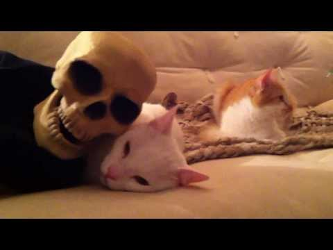Tainted Love - CATS & the singing Skull