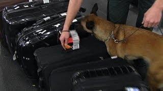 Mit Spürhunden gegen Geldwäsche | Journal