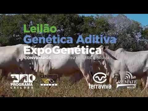 Dia 21 de Agosto: 2º Leilão Genética Aditiva Expogenética 2019