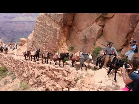 Grand Canyon mule train.