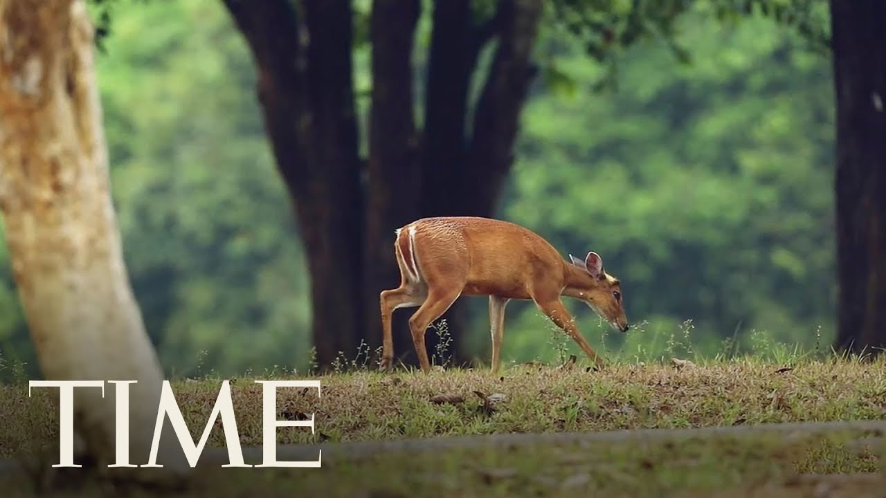 Health Officials Are Worried That 'Zombie Deer Disease' Could Someday Spread To Humans   TIME