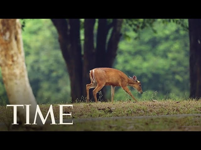 Health Officials Are Worried That 'Zombie Deer Disease' Could Someday Spread To Humans | TIME