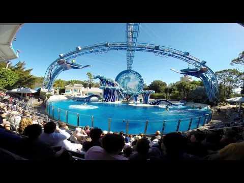 Blue Horizon - Dolphin Theater @ Seaworld Orlando HD 1080p Wide (GoPro Hero 3+ Black)