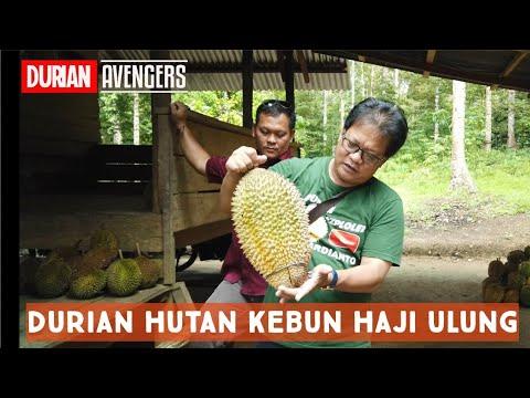 Trip Ke Kebun Durian Haji Ulung Bersama Dr. Ase Ardianto Di Mentok Bangka