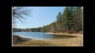 Pee in Walden Pond: How people are tainting Thoreau's treasure