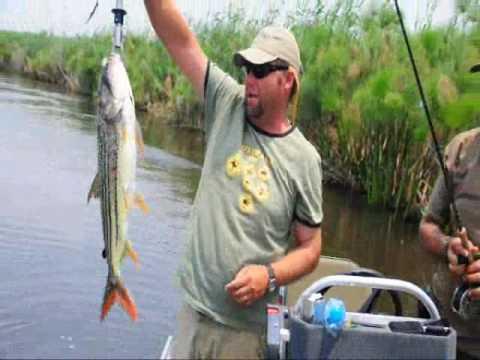 Fly Fishing for Tigerfish - Okavango Delta, Botswana - WWW.TIGERFLY.CO.BW