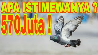 Download Video AKSI BURUNG MERPATI 570 JUTA - DIMANA ISTIMEWANYA ? MP3 3GP MP4