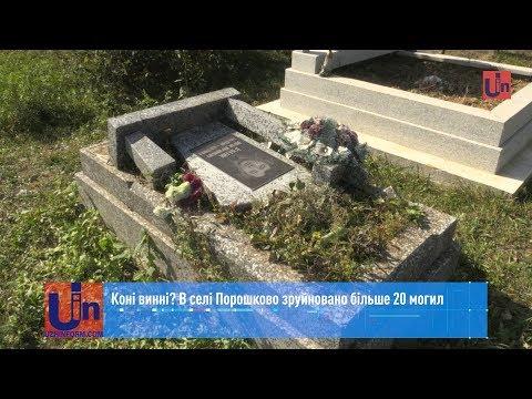 Коні винні? В селі Порошково зруйновано більше 20 могил