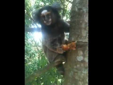 monos / monkeys !