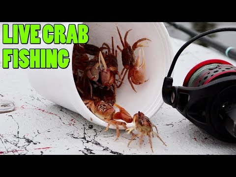 Using Live Crabs To Catch Multiple Species Of Fish