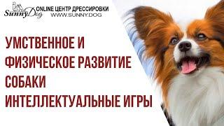 Умственное и физическое развитие собаки. Интеллектуальные и развивающие игры для собак