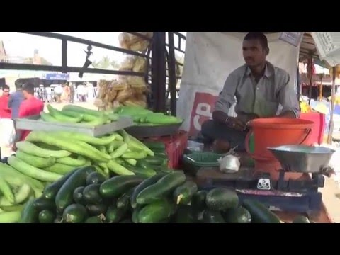 Street Food Of Rural India | Different Types Of Fresh Cucumber  Of  Shani Shingnapur, Maharashtra,