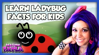 Learn Ladybug Facts for Kids - Animals for Children on Tea Time with Tayla