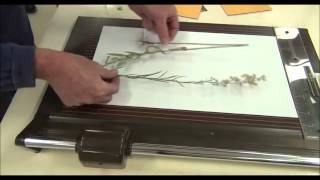 Mounting herbarium specimens-1.wmv