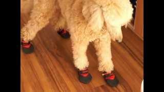 2013/01/04撮影 キャサリンにブーツを買ってあげました。ところが変な歩...