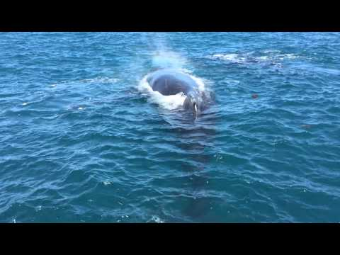 Whale watching Perth! #humpbacks