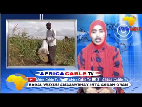 QODOBA WARKA AFRICA CABLE TV BY AYAAN ISMAACIIL SHIDDE  ARAGSN 29 7 17