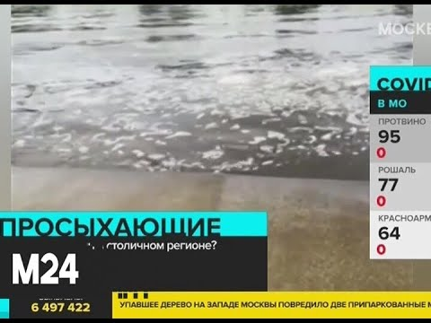 В Москве и области могут возникнуть новые подтопления - Москва 24