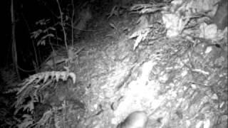 Solenodon: a venomous mammal rediscovered!