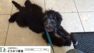 どうぶつ基金:保護犬ジオ 親の気持ち2018.7③ thumbnail