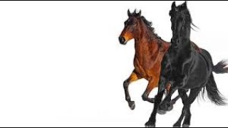 Lil Nas X-Old Town Road (Backwards)