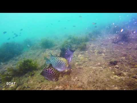 Diving in Goa, India - Day 2  - Suzy's Wreck, Boulder City
