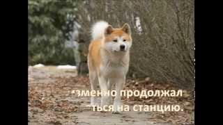 Хатико - самая преданная собака