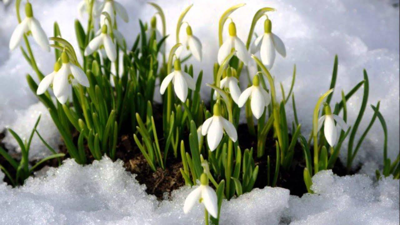 Ранняя весна - YouTube