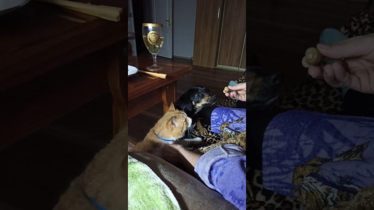 Кот и собака едят оливки - YouTube