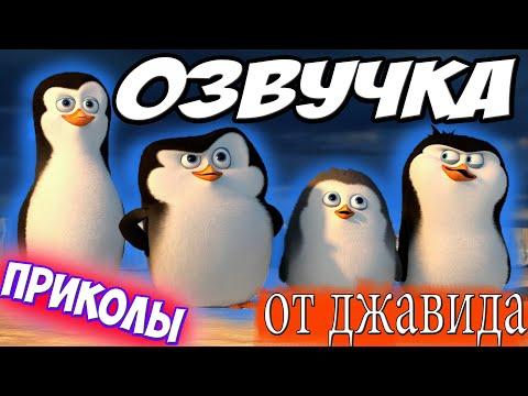 Пингвины Мадагаскара!! | ОЗВУЧКА!!! | Пародия На Джавида!! джавид каха!