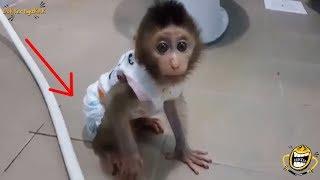 Download Video Bayi Monyet Ini Pakai POPOK!! Lihat Aksinya, Bikin Gemes Deh! MP3 3GP MP4