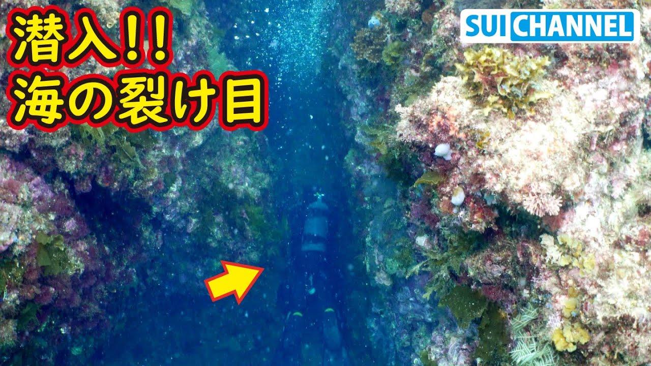 【秘境】海底の裂け目に潜入したら高級食材の巣窟だった!!