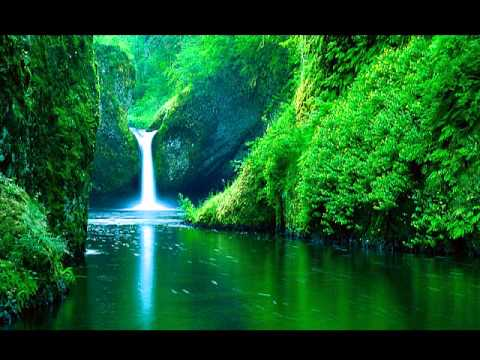 3D soundsSonido 3DSelva tropical lluvia 30 minutos rainforest