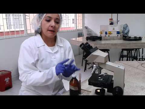 Laboratorio de biología: células vegetales