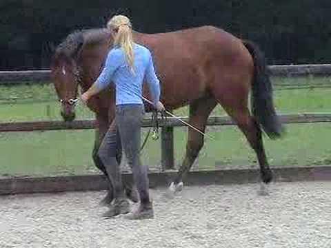 Horse Trainer Quotes. QuotesGram |Horse Training